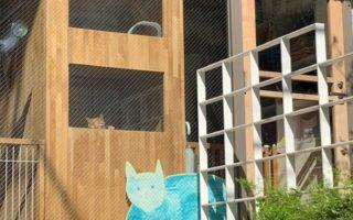 ペット飼育不可です。でもマンションそばで猫ちゃんに会えます(周辺)